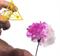 Магический цветок - фото 5799